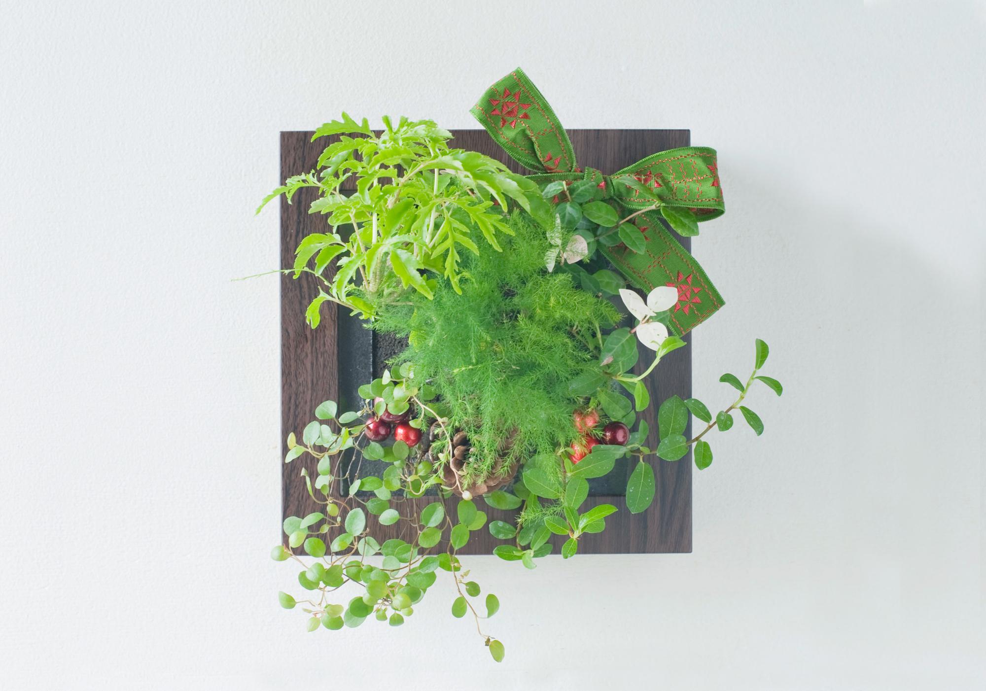"""壁にかける緑のインテリア「ミドリエデザイン フレーム」 クリスマス限定デザイン 新発売 ― """"エバーグリーン(常緑)のクリスマス""""をテーマにした限定デザイン  ―"""