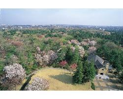 フォレスト イン 昭和館 ラウンジ ダコタの画像