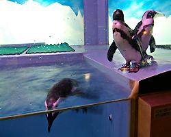 Penguin BAR Fairyのイメージ写真