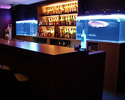 Shot Bar Arapaima