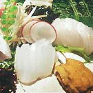 別府/湯布院/九重_和食と鉄板焼き 辿_写真6